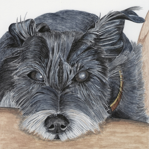 Bangs Dog Pet Portrait UK