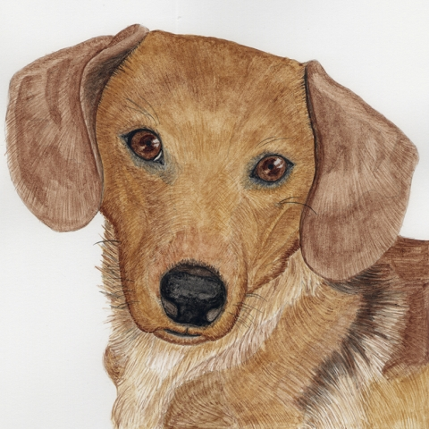 Bruno Dachshund Pet Portrait UK
