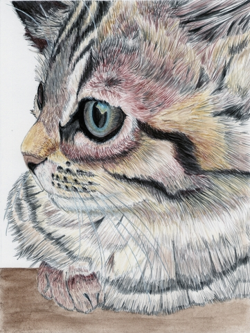 Bella Cat Pet Portrait Artist