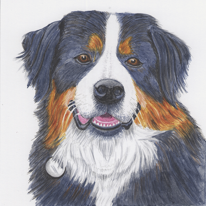 Yogi St Bernard Dog Pet Portrait