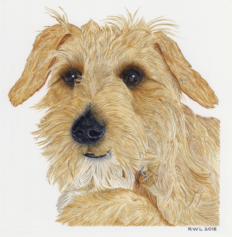 Archie Dog Pet Portrait Commission UK