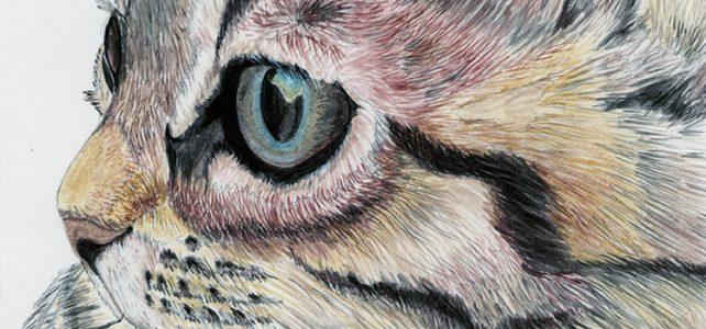 pet portraits pencil drawings artist