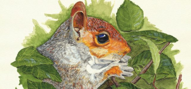 watercolour painting squirrel nature commission a painting